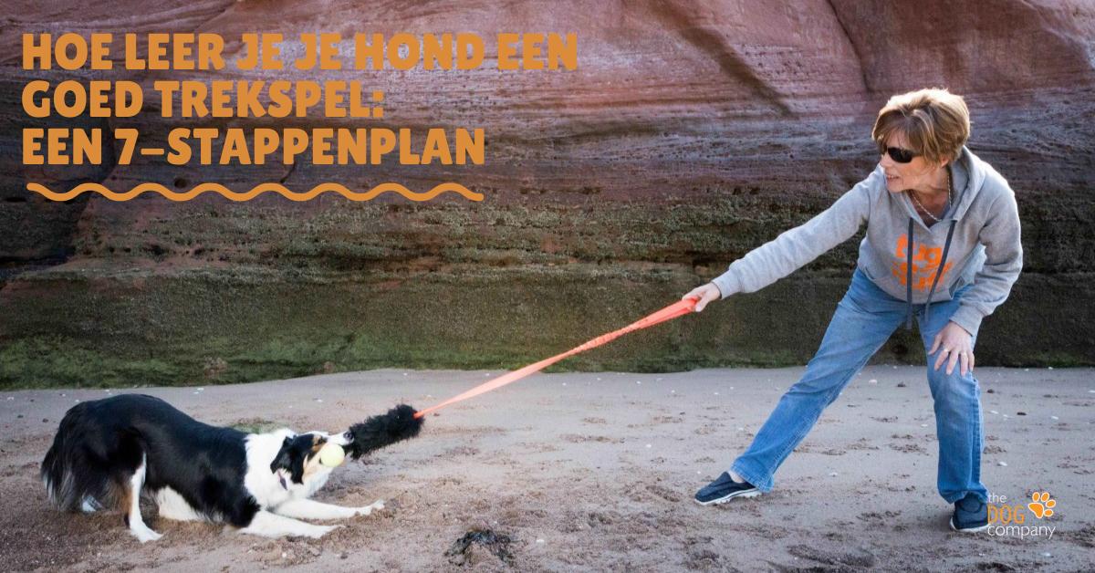 Hoe leer je je hond een goed trekspel een 7-stappenplan
