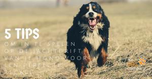 5 tips om gebruik te maken van het jachtinstinct van je hond voor een perfecte recall
