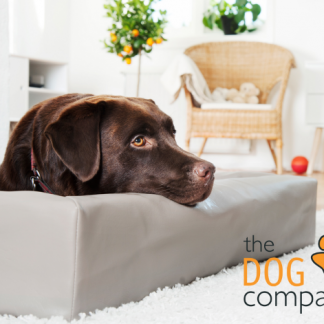 Bia-Bed-Bia-Bed-original-met-hond.png