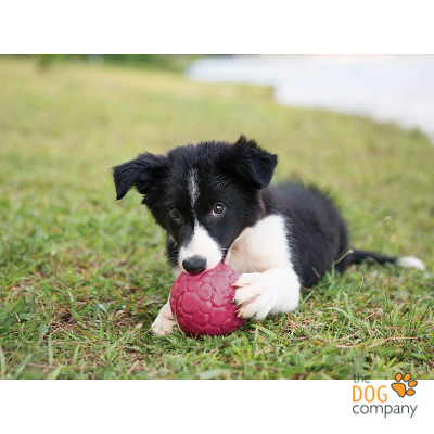 Boz bal Border collie puppy
