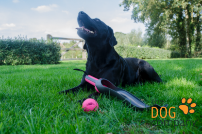 Star Shooter roze met hond