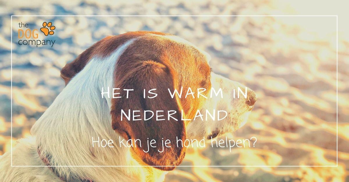 Het is warm in Nederland - hoe kan je je hond helpen?