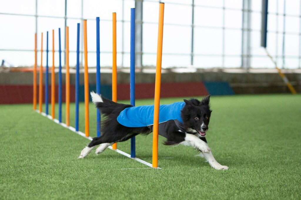 JumppaPomppa agility