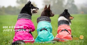 Hoe kies je de juiste hondenjas?