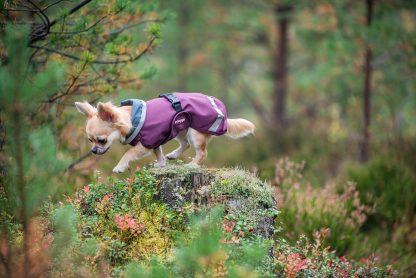 SadePomppa hondenjas Chihuahua