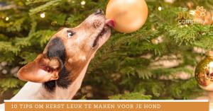 10 tips om kerst leuk te maken voor je hond
