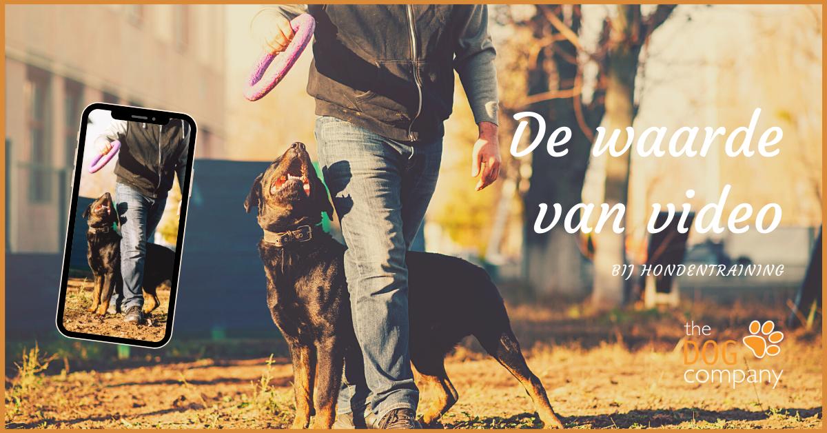 De waarde van video bij hondentraining