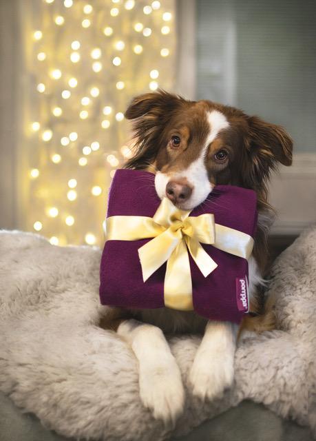 Pomppa hondenjas kerst