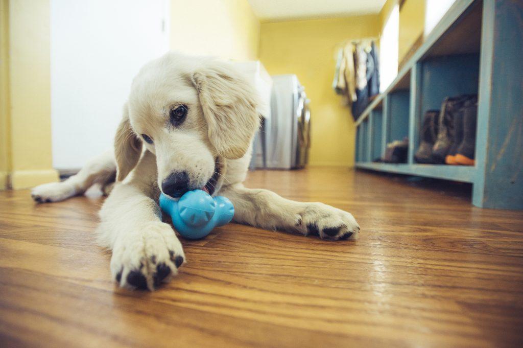Hoe puppybijten te voorkomen? Puppy is aan het bijten op een Tux voerspeeltje.