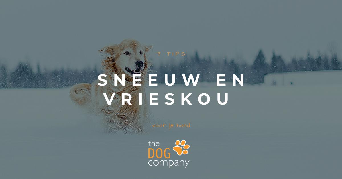 7 tips voor je hond in de sneeuw en de vrieskou