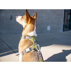 Comfort Walk Pro tuig - Dog Copenhagen - CWP-Harness-1-Outdoor-P1055151