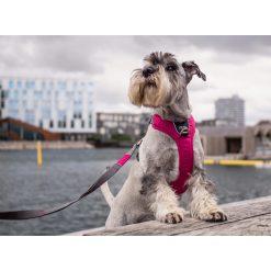 Comfort Walk Pro tuig - Dog Copenhagen - CWP-Harness-1Outdoor-P1011810