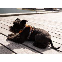 Comfort Walk Pro tuig - Dog Copenhagen - CWP-Harness-1Outdoor-P1011838