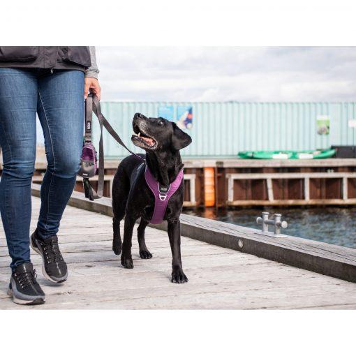 Comfort Walk Pro tuig - Dog Copenhagen - CWP-Harness-1Outdoor-P1011839