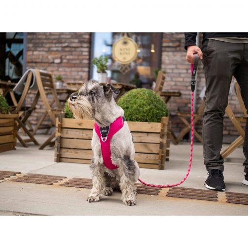 Comfort Walk Pro tuig - Dog Copenhagen - CWP-Harness-1Outdoor-P1011907