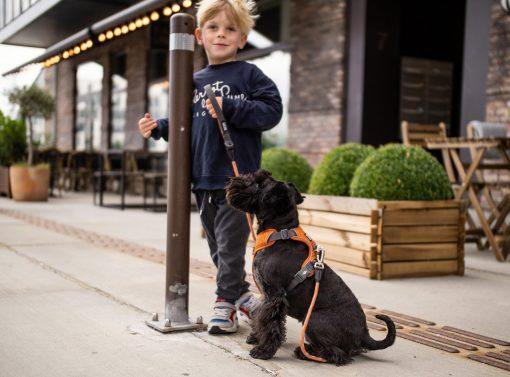 Comfort Walk Pro tuig - Dog Copenhagen - CWP-Harness-1Outdoor-P1011909V2