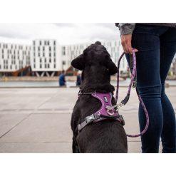 Comfort Walk Pro tuig - Dog Copenhagen - CWP-Harness-1Outdoor-P1011970V2
