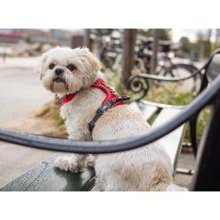 Comfort Walk Pro tuig - Dog Copenhagen - CWP-Harness-1Outdoor-P1022033