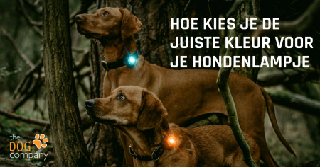 |Orbiloc Dog Dual Paars - hondenlampje
