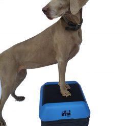 Jimi's Gym Platform met hond
